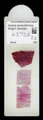 A specimen from Kew's microscope slide collection - whole slide. Image ref: KMIC001105_2018.04.13_preview