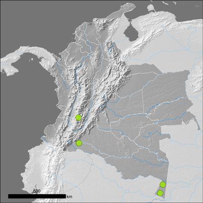 Diplopterys cabrerana (Cuatrec.) B.Gates