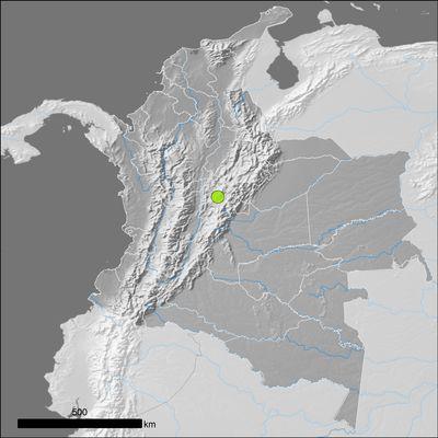 Austrocylindropuntia cylindrica (Lam.) Backeb.
