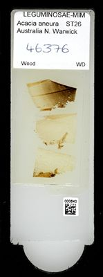 A specimen from Kew's microscope slide collection - whole slide. Image ref: KMIC000640_2016.09.12_preview