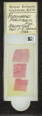 A specimen from Kew's microscope slide collection - whole slide. Image ref: KMIC000034_2015.12.18__preview