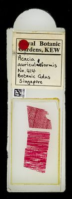 A specimen from Kew's microscope slide collection - whole slide. Image ref: KMIC001133_2018.04.13_preview