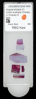 A specimen from Kew's microscope slide collection - whole slide. Image ref: KMIC000632_2016.09.12_preview