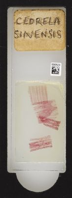 A specimen from Kew's microscope slide collection - whole slide. Image ref: KMIC000523_2016.08.12_preview