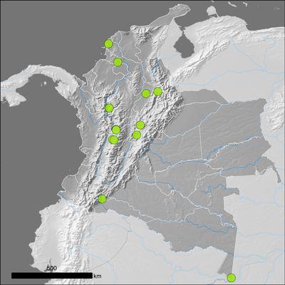 Alpinia zerumbet (Pers.) B.L.Burtt & R.M.Sm.