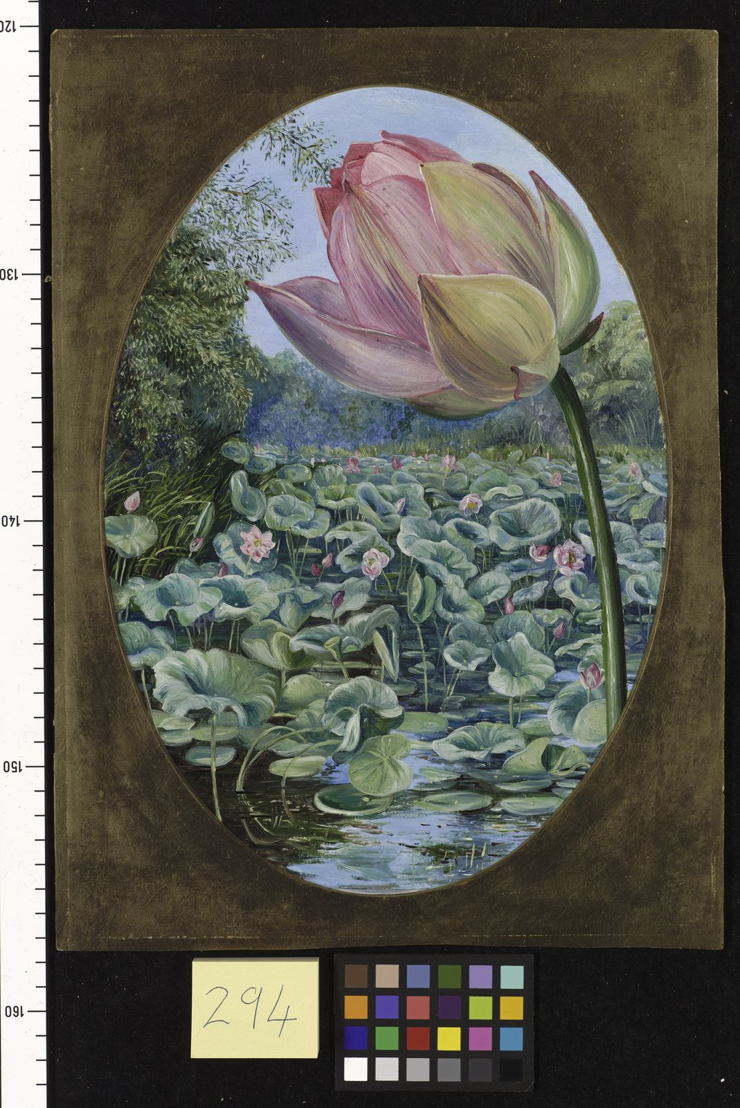 Nelumbo Nucifera Gaertn Plants Of The World Online Kew Science