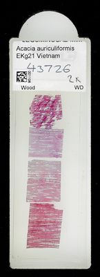 A specimen from Kew's microscope slide collection - whole slide. Image ref: KMIC001106_2018.04.13_preview