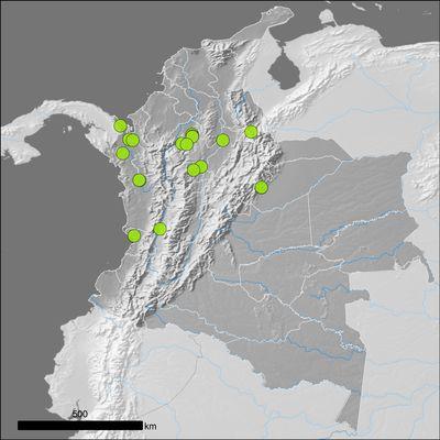 Sloanea zuliaensis Pittier