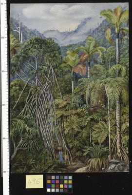 Screw-Pines, Palms, and Ferns, from the path near Venn's Town, Mahe