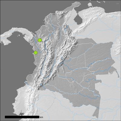 Theobroma hylaeum Cuatrec.