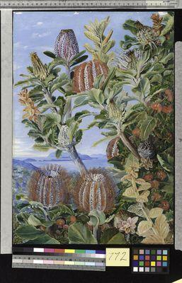 West Australian Vegetation