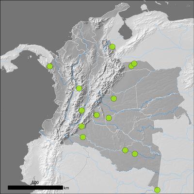 Uncaria tomentosa (Willd. ex Schult.) DC.