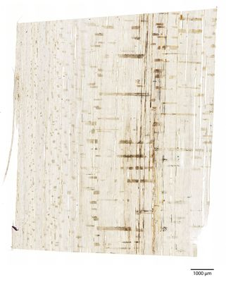 A specimen from Kew's microscope slide collection - radial longitudinal section of wood. Image ref: KMIC000781_2016.10.28-S1