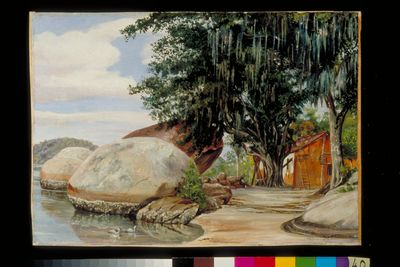 Boulders, Fisherman's Cottage and Tree hung with Air Plant, at Parquita, Brazil