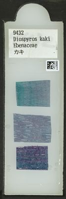 A specimen from Kew's microscope slide collection - whole slide. Image ref: KMIC000077_2015.12.18__preview