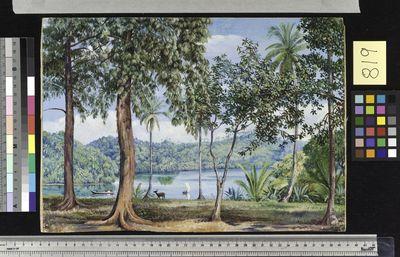 View from Kalutara, Ceylon