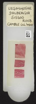 A specimen from Kew's microscope slide collection - whole slide. Image ref: KMIC000411_2016.06.21_preview