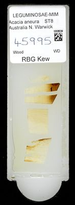 A specimen from Kew's microscope slide collection - whole slide. Image ref: KMIC000639_2016.09.12_preview