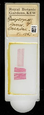 A specimen from Kew's microscope slide collection - whole slide. Image ref: KMIC000623_2016.08.26_preview