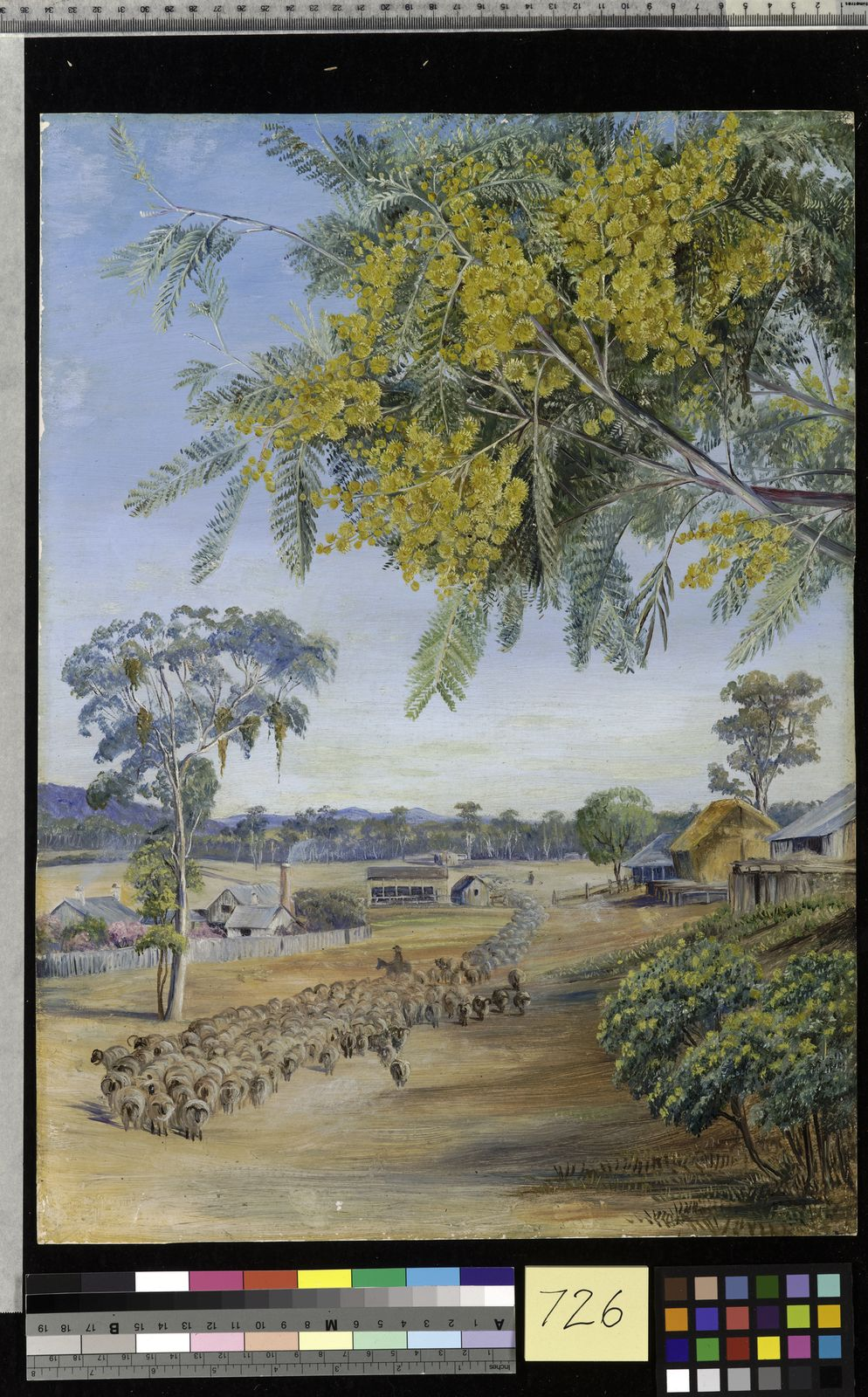 Acacia Dealbata Link Plants Of The World Online Kew Science